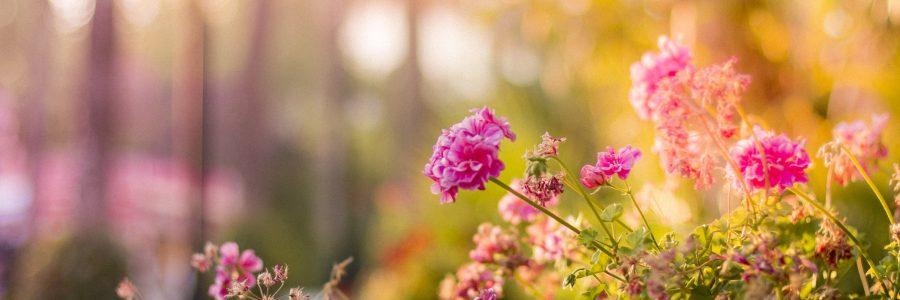 Altrincham In Bloom