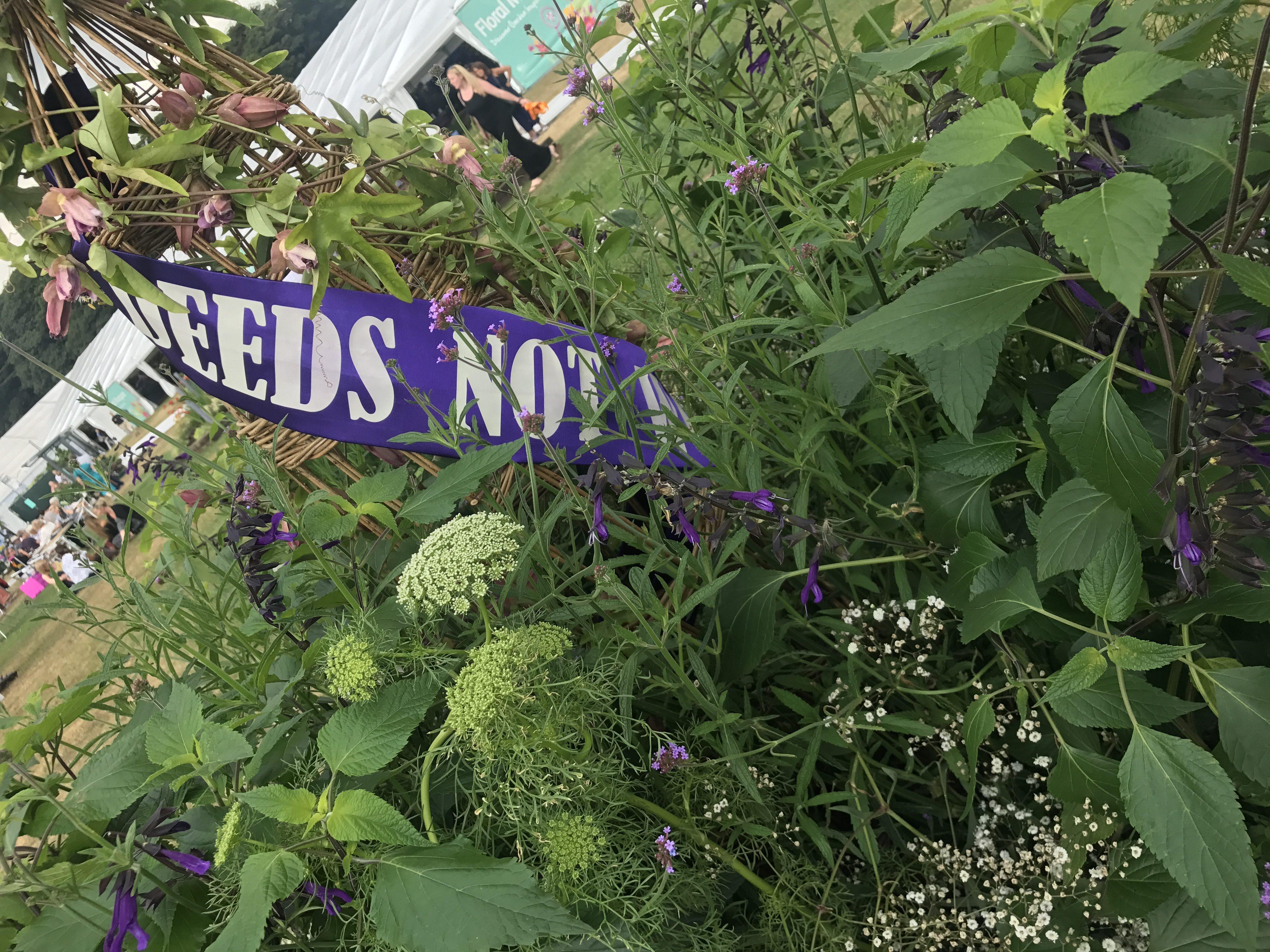 Deeds Not Words sash around Passiflora 'Amethyst' obelisk